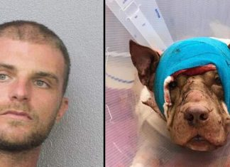 voodoo priest stabs dog