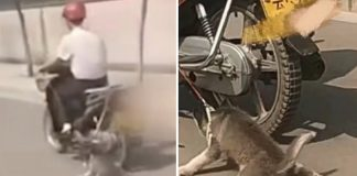man drags husky bike