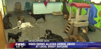 dog daycare owner beating dog