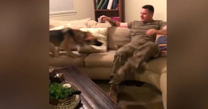 dog reunion day with soldier