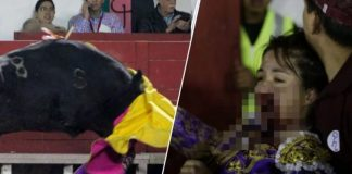 female bullfighter gored in face