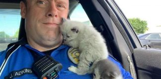 kittens cuddling police officer