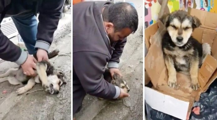 man cpr on lifeless stray puppy