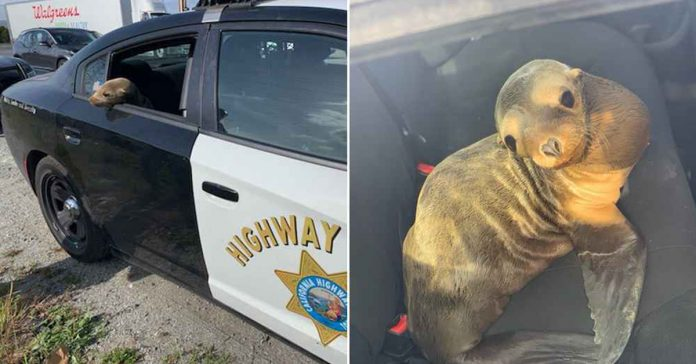 police officer arrests sea lion