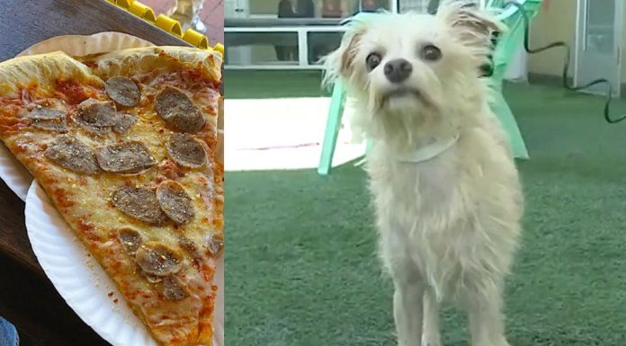 stray dog steals pizza