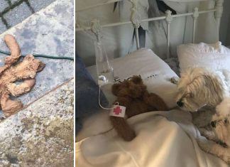Dad Rescues Dogs Favorite Teddy Bear